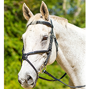 Shires Avignon Woodside Figure 8 Bridle