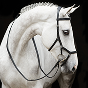 Rambo® Micklem Original Competition Bridle and Rubber Reins
