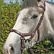 Micklem Bridle Changed My Dressage Ride