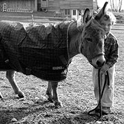 Rhino Blankets (Dazzle's Blanket Blog)